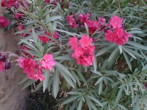 Desert flowers for my love.